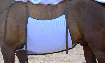 wik-smart-belly.jpg